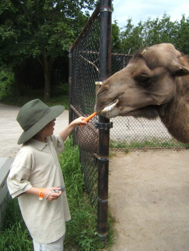 I want to be a Zoo Keeper!
