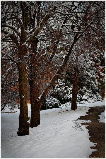 Winter Walk POBC